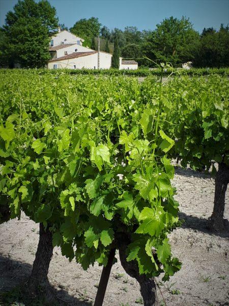 vue à l'arrivée sur Côté Provence